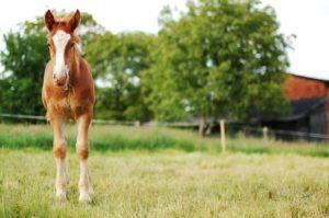Foto paard - vakantieschool werken als een paard - Stichting Optimale Ondersteuning bij Kanker