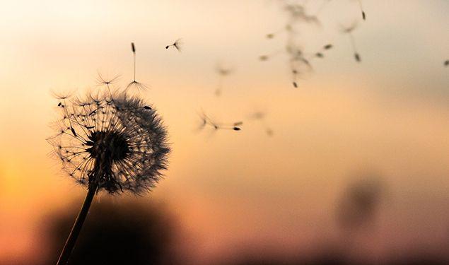 Een goed afscheid - Stichting Optimale Ondersteuning bij Kanker
