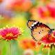 foto Poppy's Lezing - Stichting Optimale Ondersteuning bij Kanker