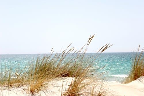foto strand NVVE - Stichting Optimale Ondersteuning bij Kanker